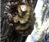 bees-tree.jpg