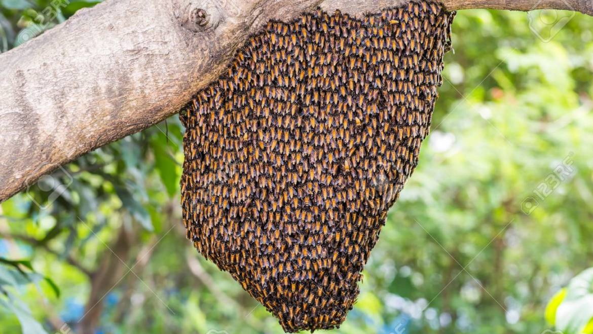 Bee Swarm Capture