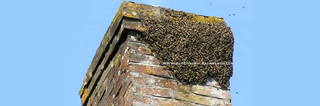 BeeSwarmChimney1-1024x341.jpg