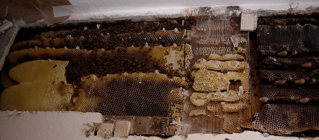 bee-hive-in-wall.jpg
