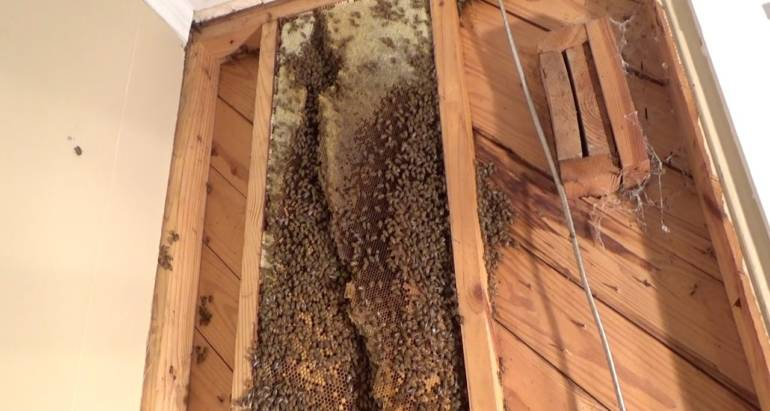 Bee Removal 2